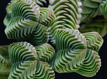 fractal 20.jpg